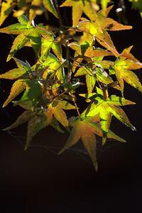 川越の秋 - デジカメ写真集
