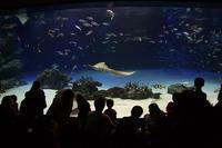 水族館@池袋サンシャイン60 - デジカメ写真集