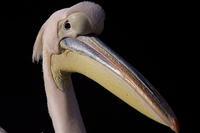 サンシャイン60水族館(2) - デジカメ写真集