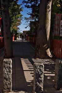 秋の色@川越 - デジカメ写真集