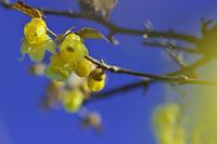 高麗の里、冬景色 - デジカメ写真集