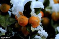初雪2012-02-00更新 - 夕陽に魅せられて・・・