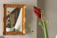 これも愛 あれも愛 - 美は観る者の眼の中にある