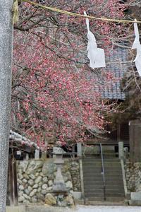 春近し@高麗の里 - デジカメ写真集