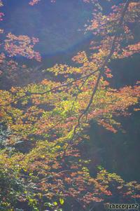景信山→小仏城山→高尾山 その⑨ - 光の贈りもの