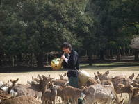 奈良公園「鹿寄せ」in奈良 京都奈良逃亡の旅 2012春 - Hawaiian LomiLomi ハワイのおうち 華(レフア)邸