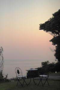 桜色に染まる -  アルビレオの 雑記帳
