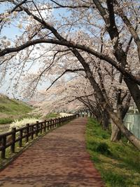 芥川堤の桜並木 - My Favorite Things