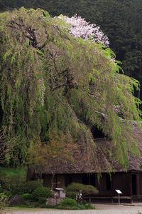 桜が散って、高麗の里 - デジカメ写真集