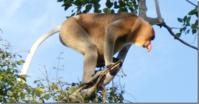 ガラマ川のリバークルーズに出会える動物 - コタキナバル 旅行記・ブログ