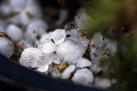 雹が降る - デジカメ写真集