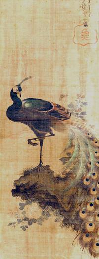 芦雪の孔雀 - ≫自★遊☆猫★道≪