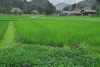 高柳荻の島の棚田 - デジカメ写真集