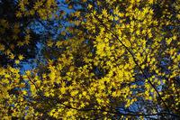 三峰神社の紅葉(2) - デジカメ写真集