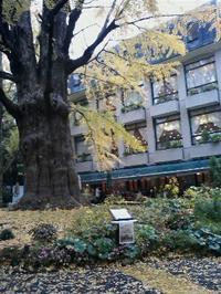 松本楼前の首掛けいちょう - あるiBook G4ユーザによるブログ