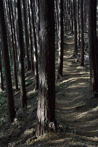 ご近所のハイキング、天覚山へ - デジカメ写真集