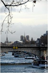 COURS DE LA REINE 4 - いつものパリ