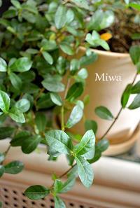 メリハリ大切。。。四緑木星 - Miwaの優しく楽しく☆
