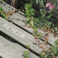 MEDLERの木箱とフシギの地下室#1 - Signifié/Signifiant