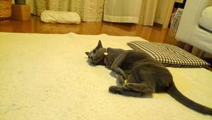 7歳と6ヶ月。 - ネコと魔法のコトバとやさしい時間。