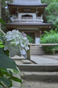 浄智寺 - デジカメ写真集