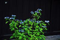 東慶寺の花 - デジカメ写真集