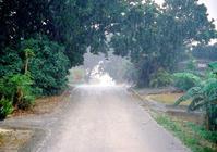 雨の日写真 - あ お そ ら 写 真 社