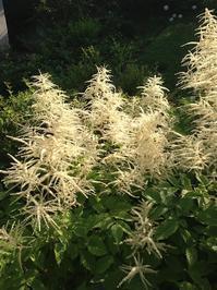 白い花のシロップ - トビイ ルツのTraveling Mind