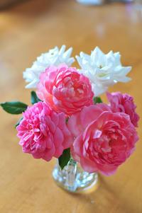 2013年8月8日(木)バラ3番花 - わびさび日記