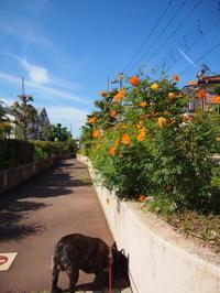 ワンコの散歩 - ichibey日々の記録