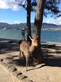厳島神社 - トビイ ルツのTraveling Mind