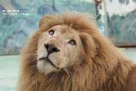にっきほきゅう - 朝から晩まで動物園。(サファリもね)