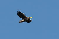 大鷲3 - 野鳥フレンド  撮り日記