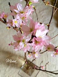 「春」の扉 - Miwaの優しく楽しく☆
