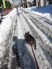大雪 - ichibey日々の記録
