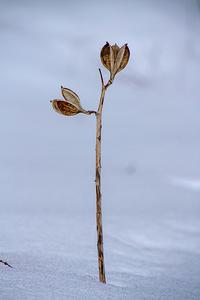 枯れ草や枯れ花@高麗の里 - デジカメ写真集
