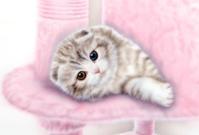 【再】リアリズム絵画:スコティッシュ・オッドアイ Version 2:メイキング - junya.blog(猫×犬)リアリズム絵画