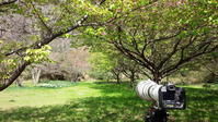 ウタツグミ - 野鳥フレンド  撮り日記
