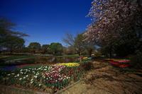 今日は昭和記念公園に行って来ました - ichibey日々の記録