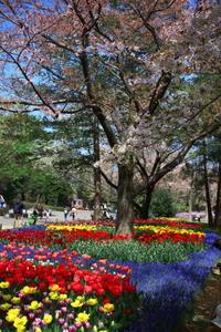 昭和記念公園の続き - ichibey日々の記録