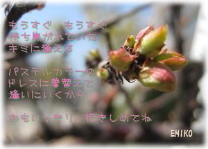 タイトルの無いきまぐれPhotoPoem その2 - Misty Cafe