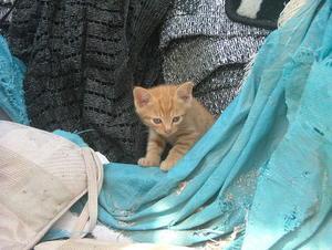 子猫 - 本日、平凡