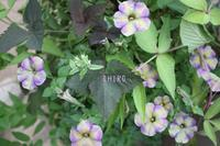 癒される寄せ植え - CHIROのお庭しごと