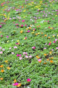 夏の準備 - お花びより