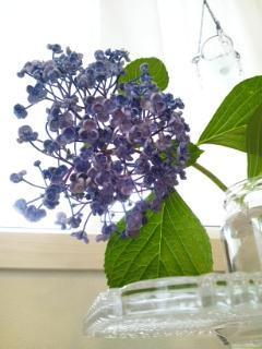 紫陽花 - adagio