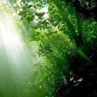 森のひとと千年の記憶と縄文杉の孤独 - Signifié/Signifiant