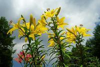 高原に咲く22014_09_07更新 - 夕陽に魅せられて・・・
