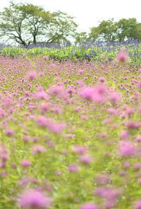 お花畑 - お花びより