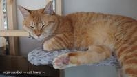 猫タワーのネオ - 虹色せんべい