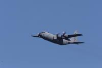USAF - 野鳥フレンド  撮り日記